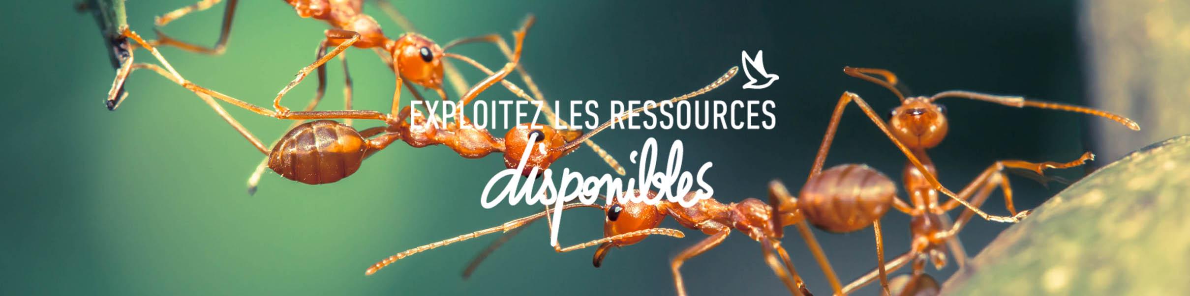 exploitez_ressources